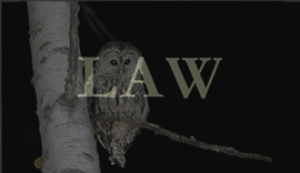 andrea_goldman_owl_law